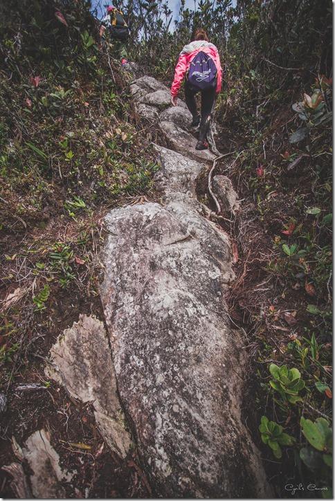 Vertical climbs